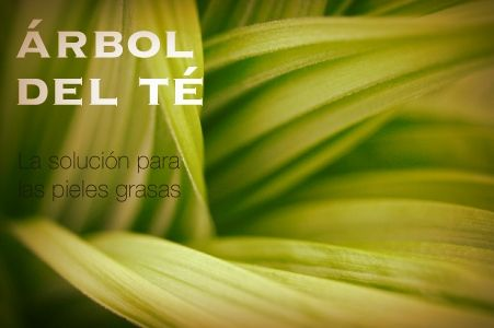 FACIAL_ARBOL_TE-1 Productos