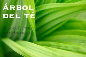 FACIAL_ARBOL_TE-300x200 FACIAL_ARBOL_TE
